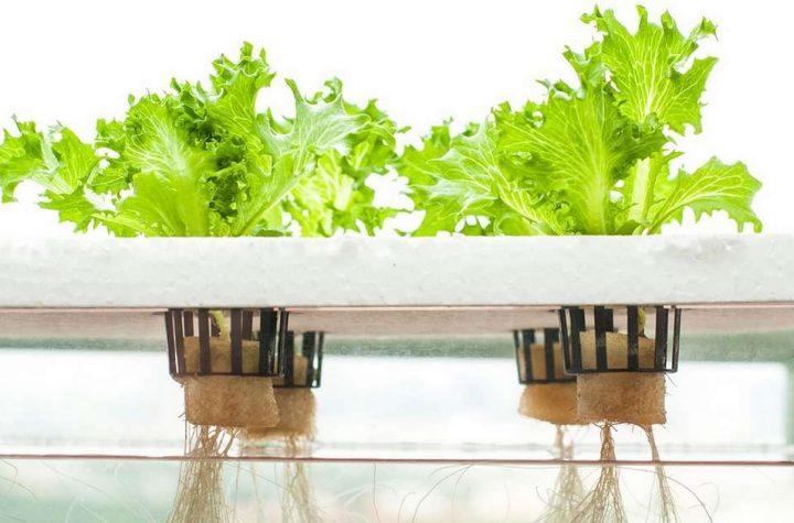 the future is hydroponics